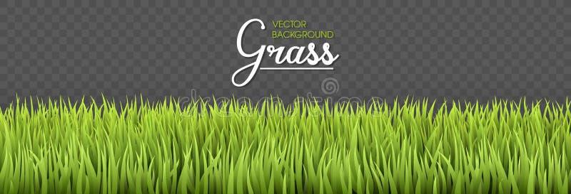 Fond d'été Frontières d'herbe verte Donnez à la haute herbe une consistance rugueuse fraîche verte d'isolement sur le fond transp illustration libre de droits