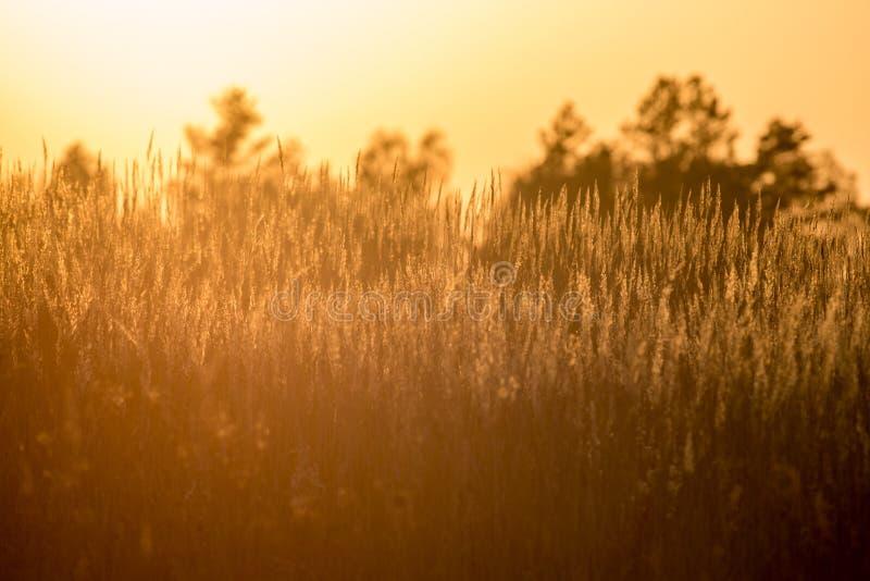 Fond d'été d'herbe sèche photos libres de droits