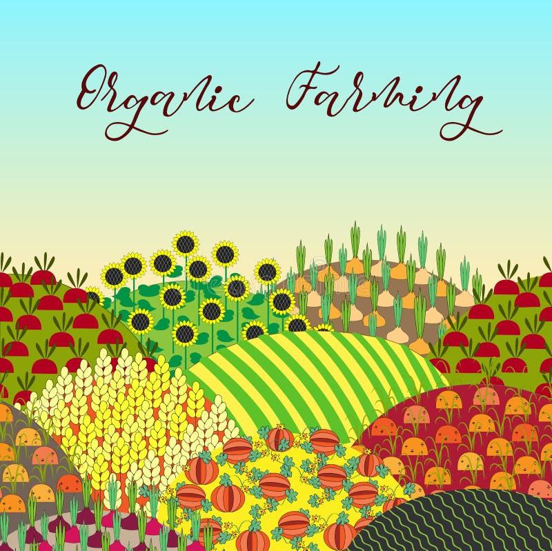 Fond d'agriculture biologique Modèle avec le paysage abondant de champs illustration libre de droits