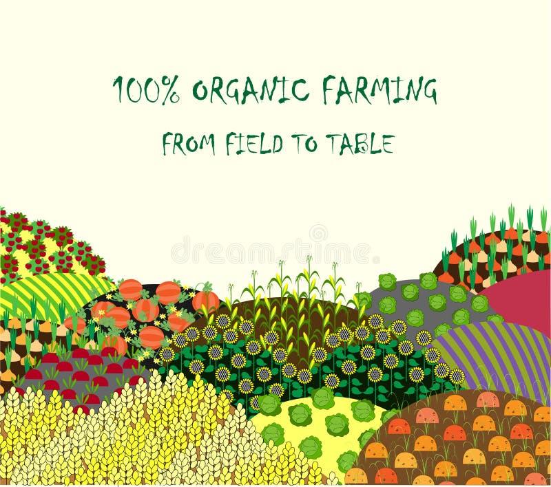 Fond d'agriculture biologique Vue avec le paysage abondant de champs illustration stock