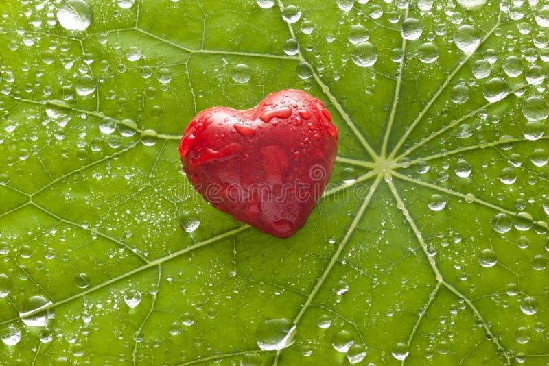 Fond d'amour de coeur de feuille photos stock