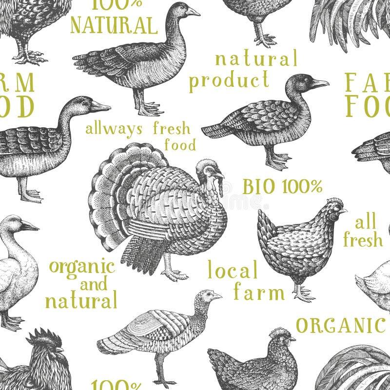 Fond d'animaux de ferme de vecteur Illustration de cru Oiseaux tirés par la main de ferme Modèle sans couture de volaille illustration libre de droits