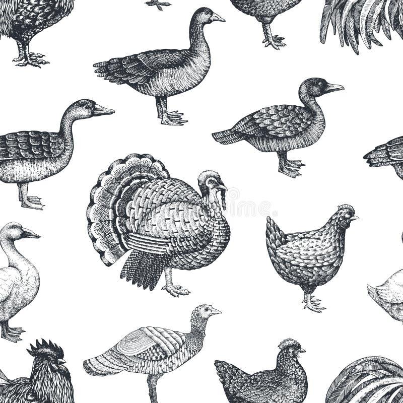 Fond d'animaux de ferme de vecteur Illustration de cru Oiseaux tirés par la main de ferme Modèle sans couture de volaille illustration de vecteur