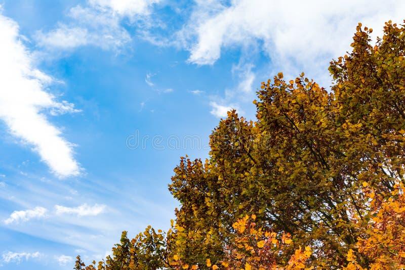 Fond d'arbre d'auvent d'Autumn Orange Yellow Red Leaves de ciel bleu photos stock