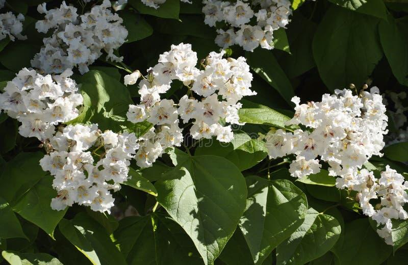 Fond d'arbre de fleur de parc Jacques Cartier de Gatineau dans la province d'Ontario photographie stock libre de droits