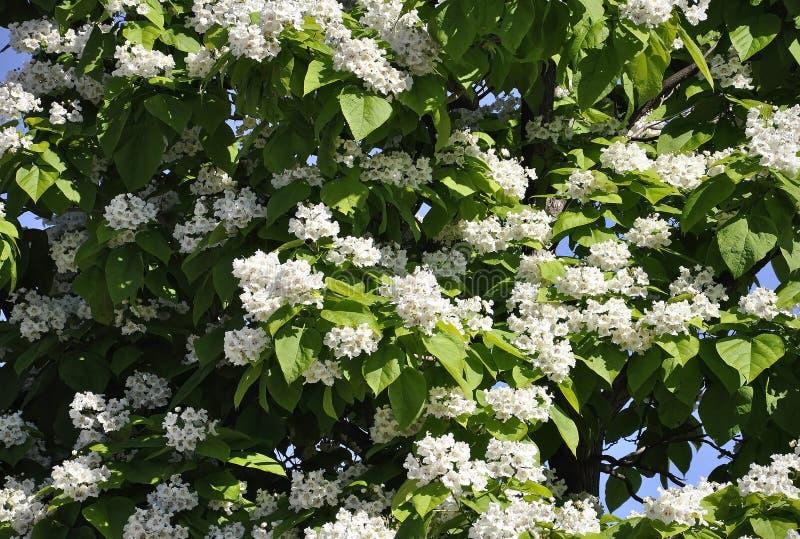 Fond d'arbre de fleur de parc Jacques Cartier de Gatineau dans la province d'Ontario photos libres de droits