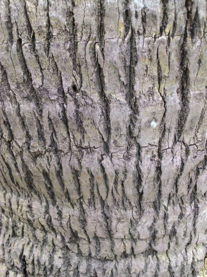 Fond d'arbre de noix de coco photos libres de droits