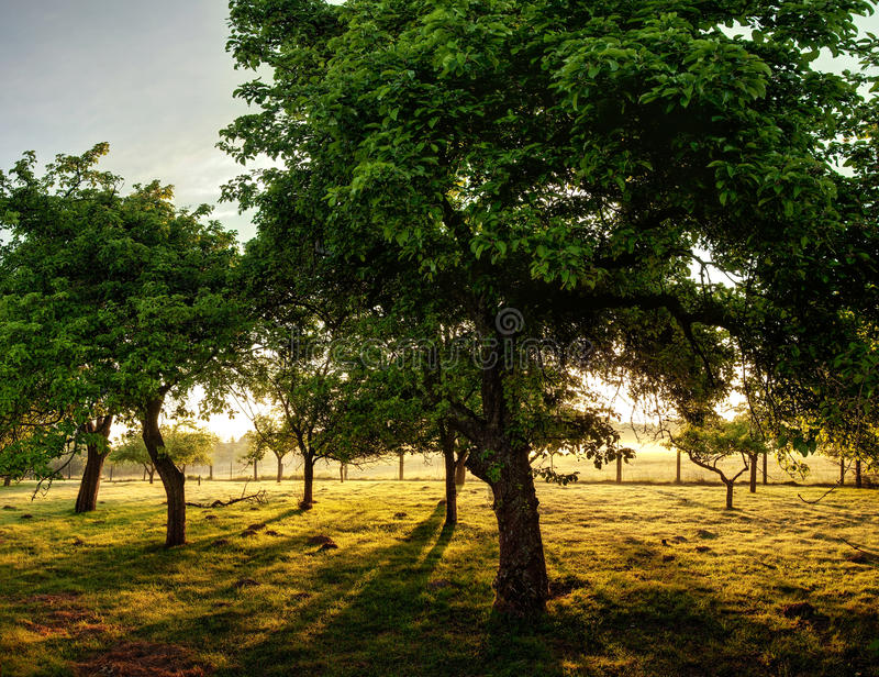 Fond d'arbres photos stock