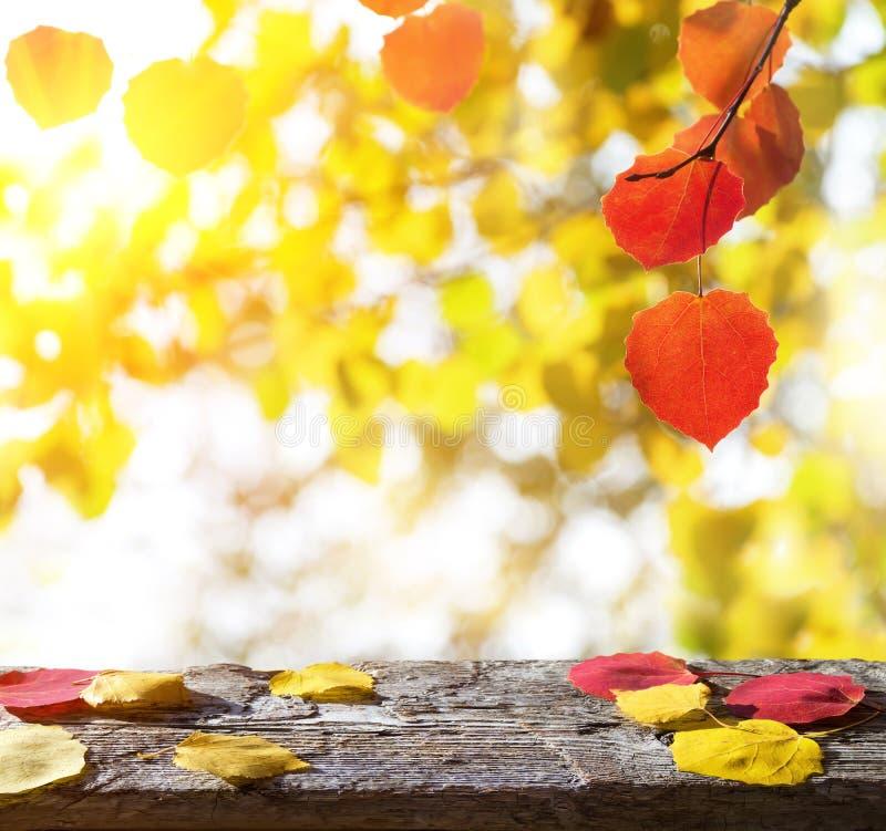 Fond d'automne avec des feuilles images stock