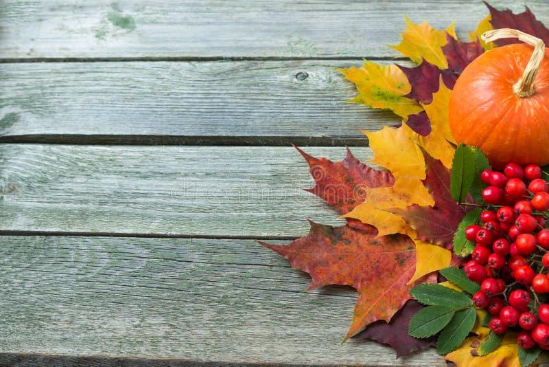 Fond d'automne avec des potirons, des feuilles et la cendre de montagne rouge photo libre de droits