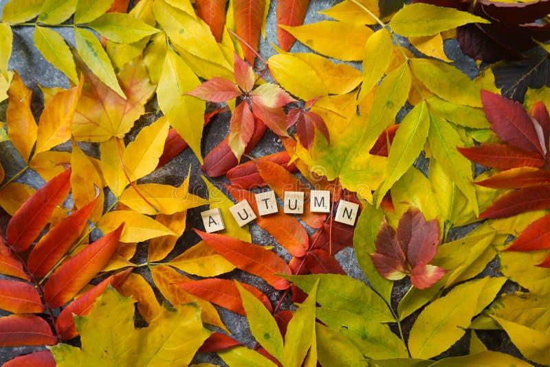 Fond d'automne avec feuilles colorées photo stock