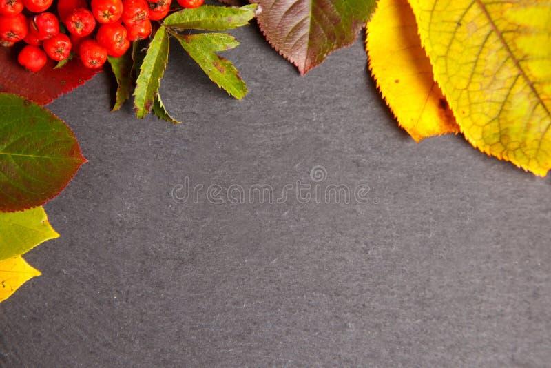 Fond d'automne avec les lames colorées photo libre de droits