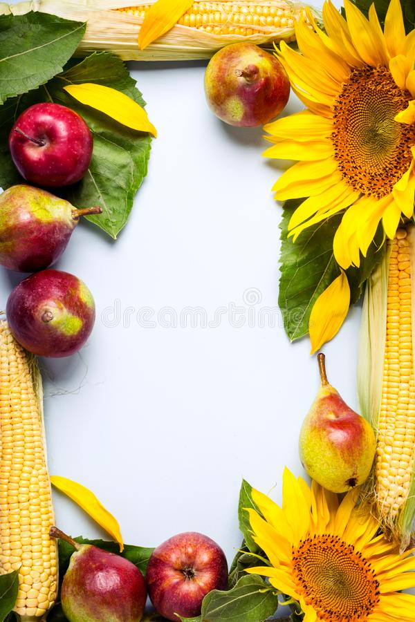 Fond d'automne cadre fait de tournesol, maïs et poires photos libres de droits