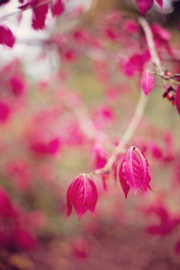 Fond d'automne de cru photos stock