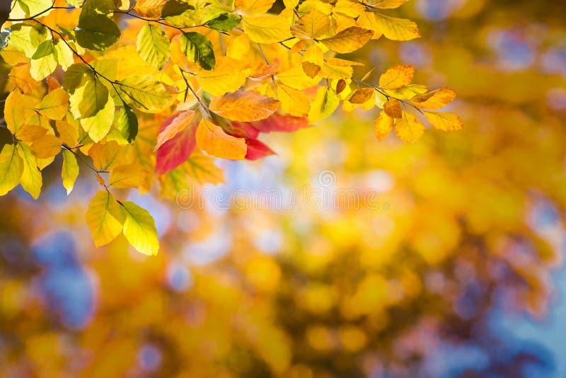 Fond d'automne de nature photos stock