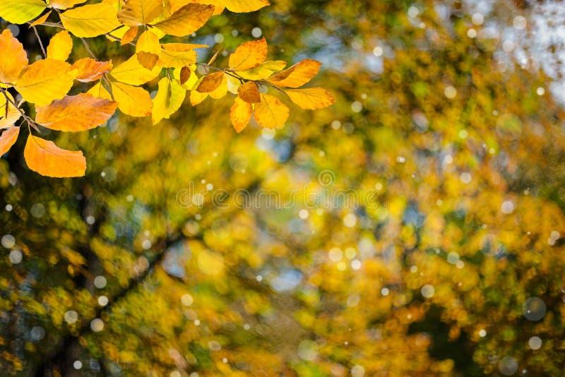 Fond d'automne de nature photographie stock