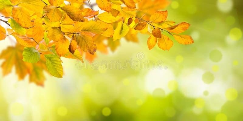 Fond d'automne de nature photos libres de droits