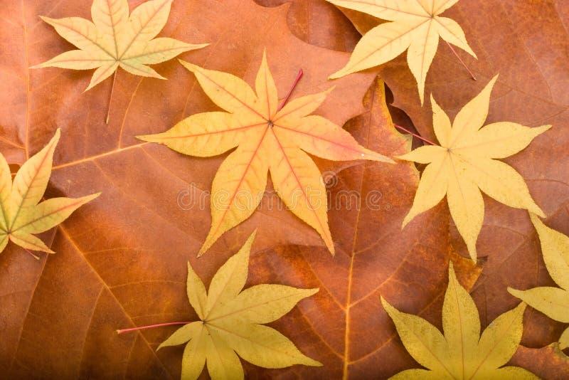 Fond d'automne des lames d'érable photographie stock