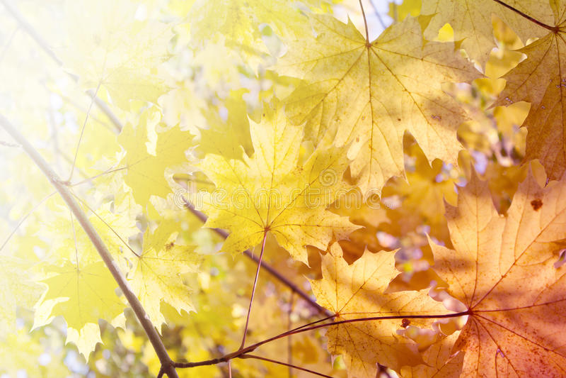 Fond d'automne - feuilles de jaune photo stock