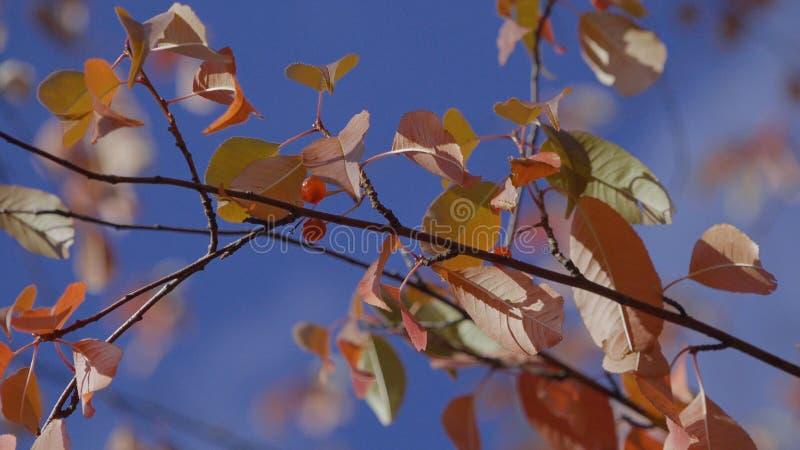 Fond d'automne Plan rapproché de branche d'automne contre le ciel La chute part sur le bruissement de brindille en vent dans les  photos libres de droits