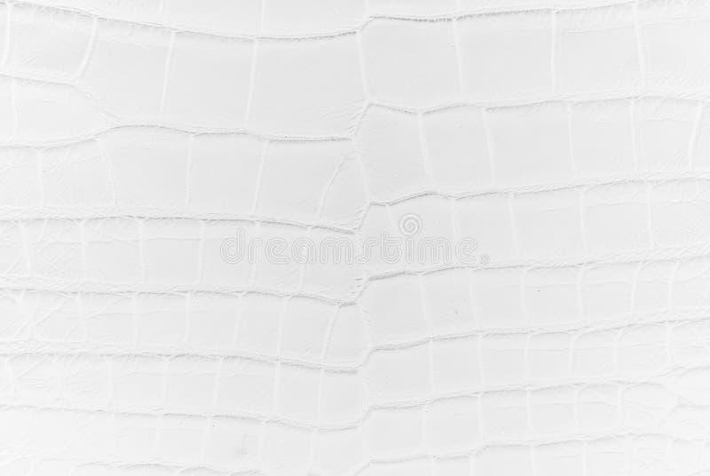Fond d'eau douce de texture de peau d'os de crocodile photos stock