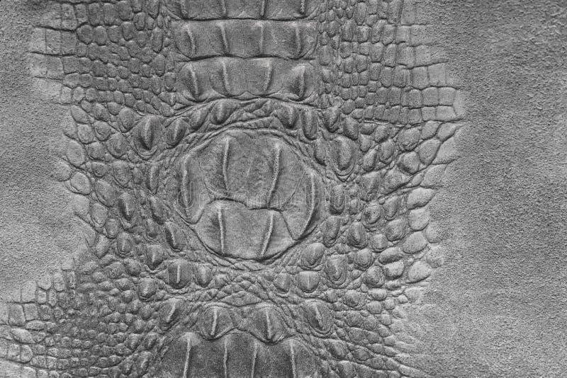 Fond d'eau douce de texture de peau de ventre de crocodile photographie stock libre de droits
