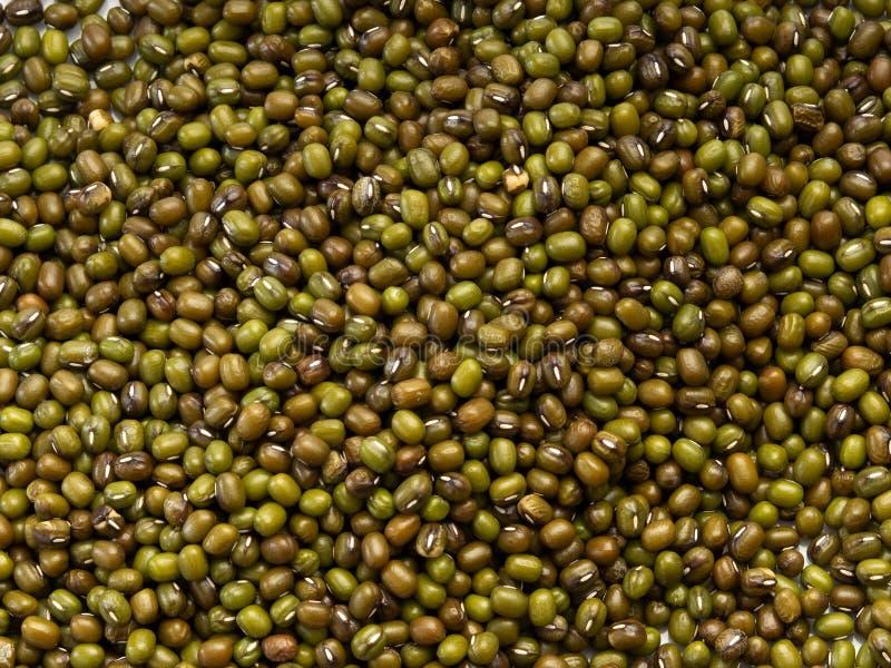 Fond d'haricot vert ou de fèves de mung images libres de droits