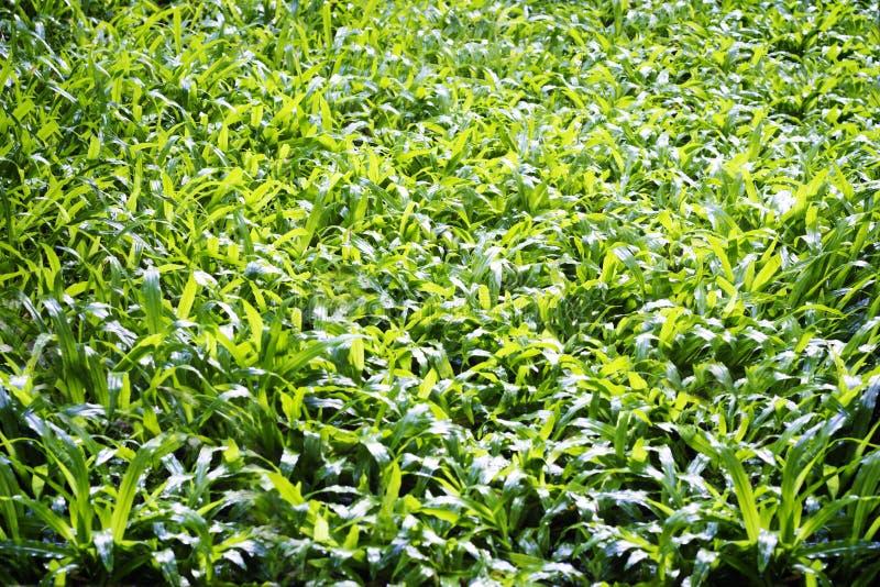 Fond d'herbe après pleuvoir photos stock