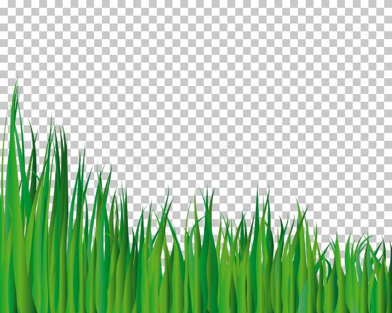 Fond d'herbe illustration libre de droits