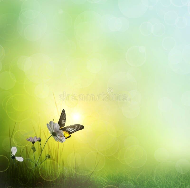 Fond d'herbe. Guindineau sur une fleur image libre de droits