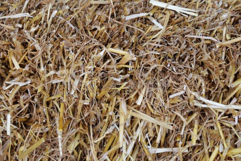 Fond d'herbe sèche de paille, plan rapproché images stock