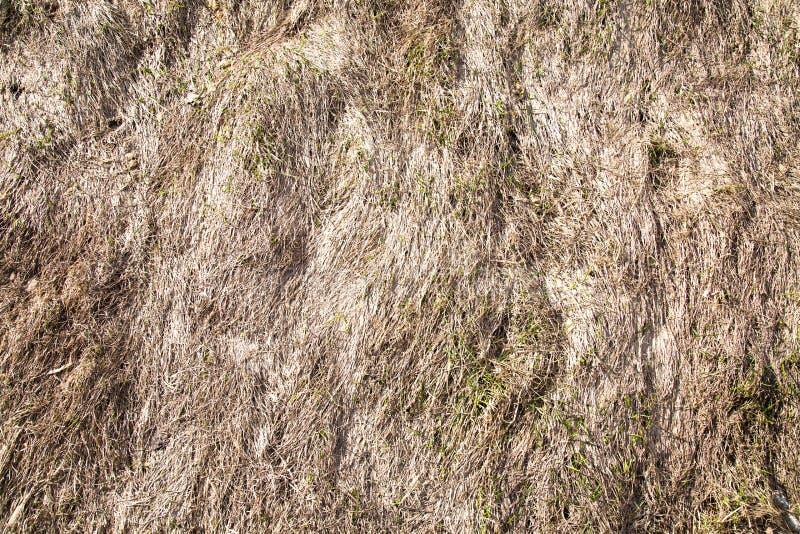 Fond d'herbe s?che sur la pente en premier ressort milieux photos libres de droits