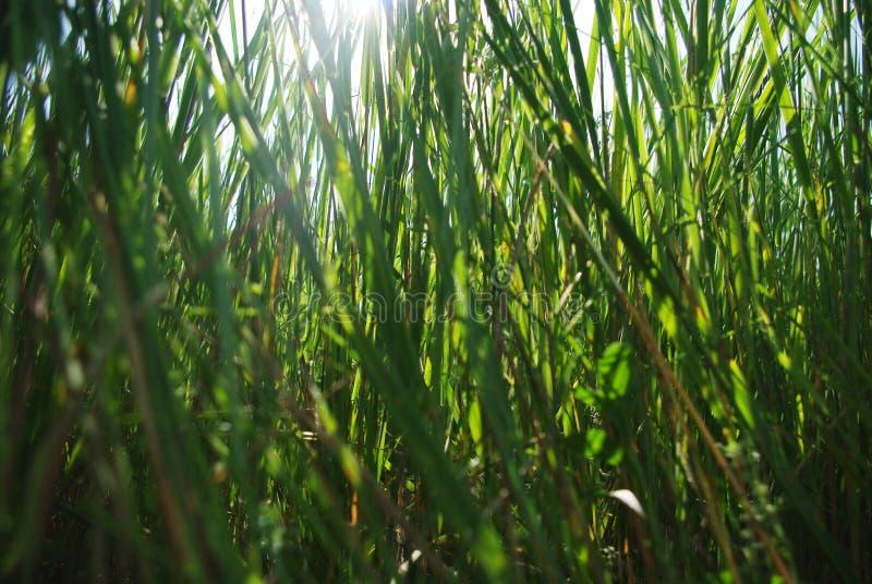 Fond d'herbe verte avec des rayons du soleil par lui photo stock