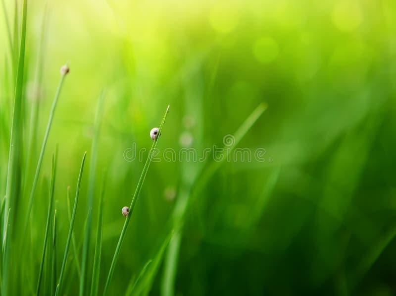 Fond d'herbe verte avec le bokeh de couleur images libres de droits