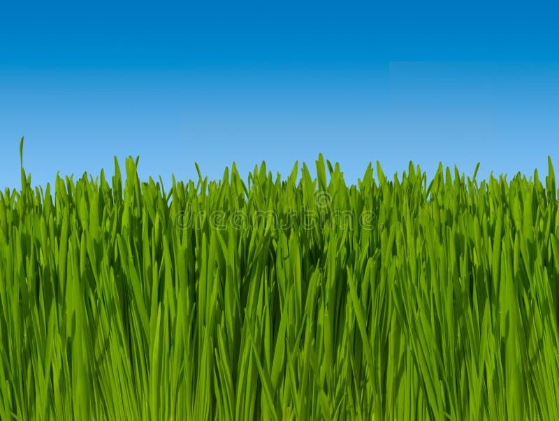 Fond d'herbe verte contre le ciel bleu (macro orientation) 16 inc. photo stock