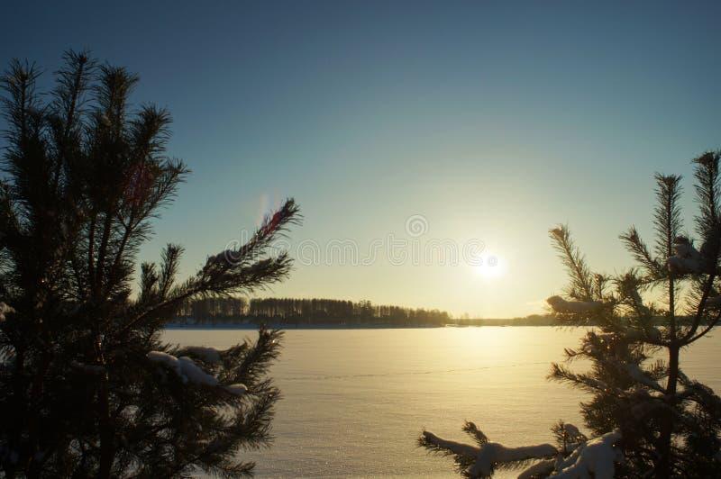 Fond d'hiver - arbre de Noël congelé et neige brouillée images stock