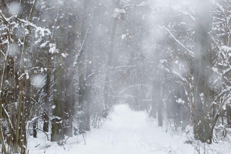 Fond d'hiver de chutes de neige photo libre de droits