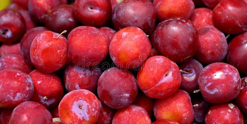 Fond d'image organique fraîchement sélectionné de fruit de prunes photos stock