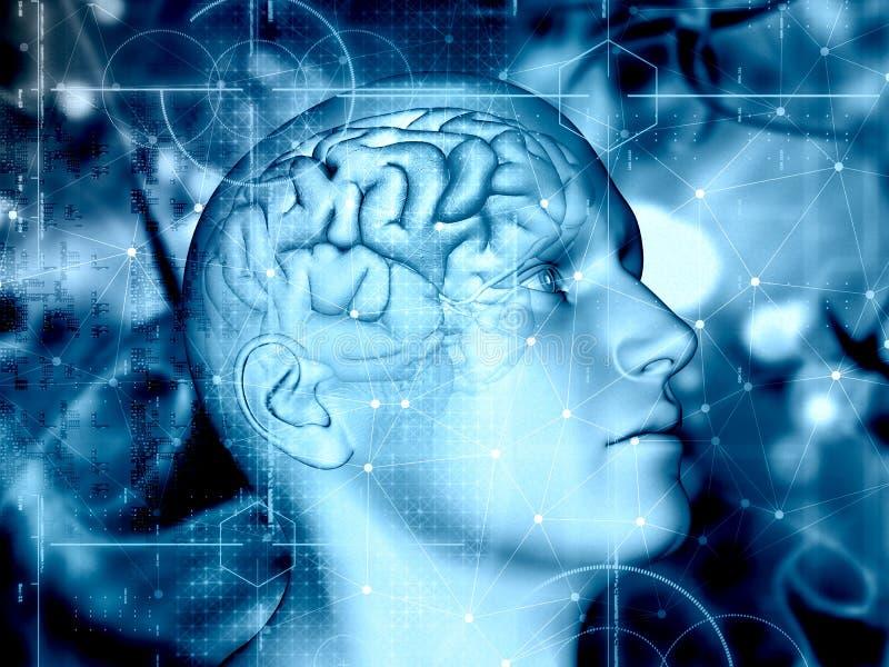 fond 3D médical avec le chiffre masculin et cerveau accentué illustration libre de droits