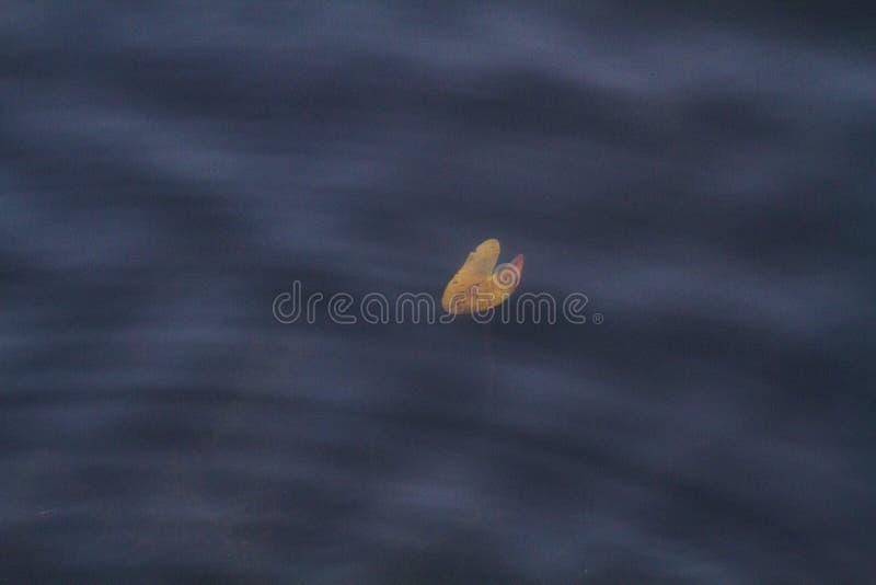 Fond d'ondulations et de vagues de l'eau bleue photos stock
