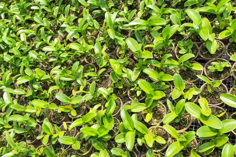 Fond d'usine d'orchidée images stock