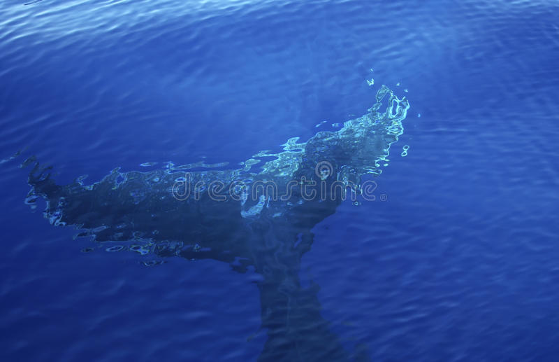 Fond de baleine image stock