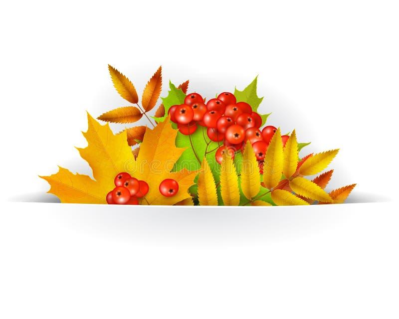 Fond de bannière, d'automne ou carte de calibre avec les baies jaunes de feuilles d'érable et de cendre de montagne illustration libre de droits