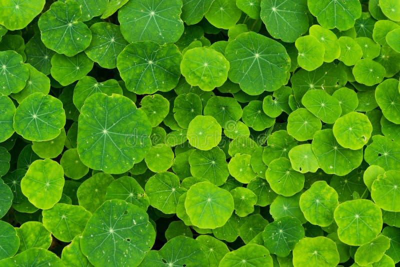 Fond de beaucoup de plantes vertes images stock