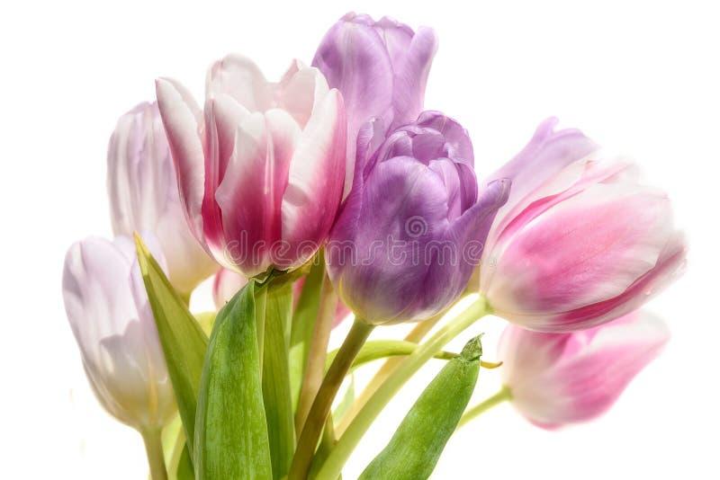 Fond de blanc de bouquet de fleurs de tulipes images libres de droits