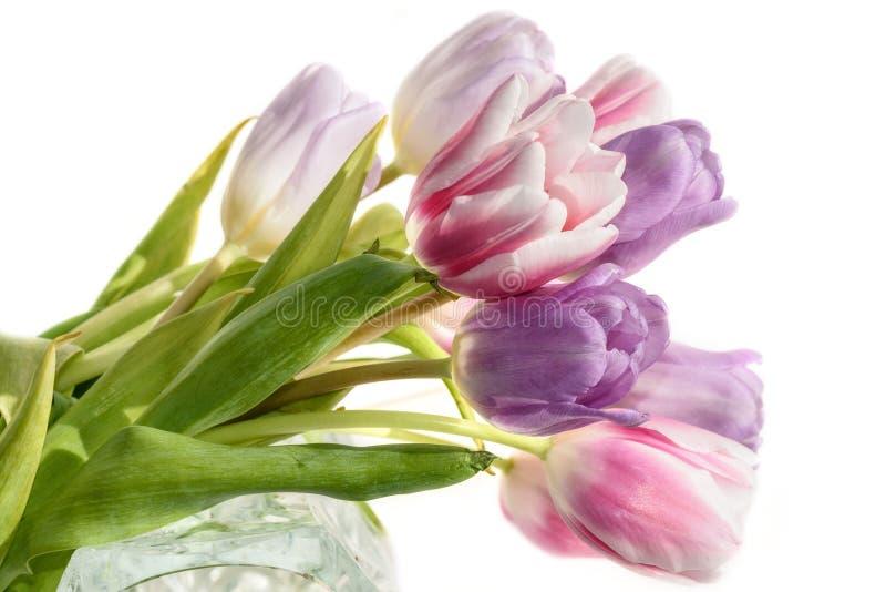 Fond de blanc de bouquet de fleurs de tulipes photos libres de droits