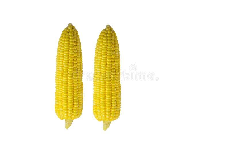 Fond de blanc de la tête deux de maïs photographie stock libre de droits
