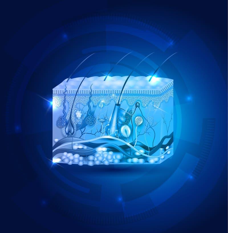 Fond de bleu d'abrégé sur anatomie de peau illustration stock