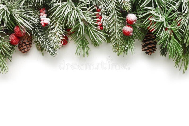 Fond de branches d'arbre de Noël photographie stock