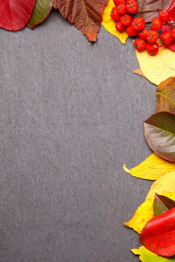 Fond de cadre de feuilles d'automne sur la pierre noire Vue supérieure photo libre de droits